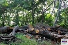 دستور مدیر کل حفاظت محیط زیست گیلان جهت بررسی دقیق و کارشناسی خسارات وارده به زیستگاه و یا تلفات احتمالی حیات وحش در استان